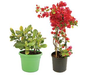 -20% Σε ΟΛΑ τα Φυτά!