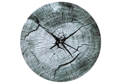 ΡΟΛΟΙ ΤΟΙΧΟΥ TREE BARK Φ.38CM