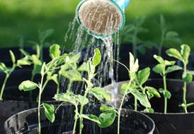 Αγοράστε σπόρους για τον κήπο σας