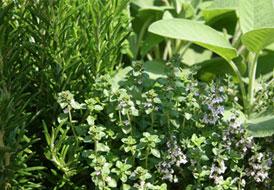 Διώξτε κουνούπια και μύγες με φυτά και δέντρα
