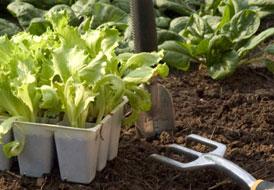 Μυστικά της επιτυχίας του λαχανόκηπου