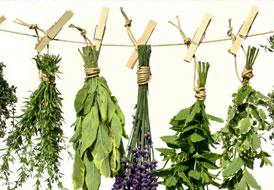 Πράσινο φαρμακείο στον κήπο σας