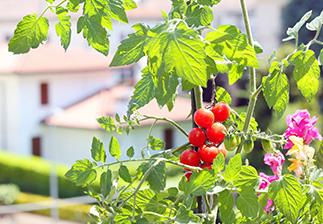Φτιάξε τον δικό σου λαχανόκηπο στη βεράντα