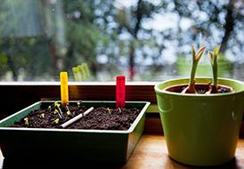 Φυτεύοντας βολβούς το φθινόπωρο